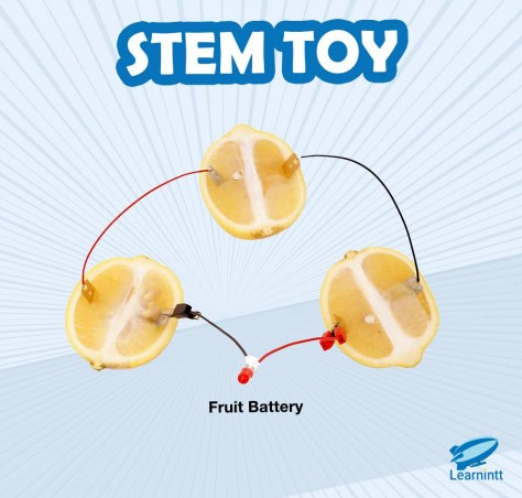 STEM Toy: Fruit Battery (For Age 4-8)